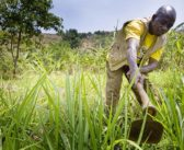 Applications now open for $2m African agri-tech prize
