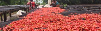 SA's GreenFingers Mobile launches SaaS platform for digital farmer management